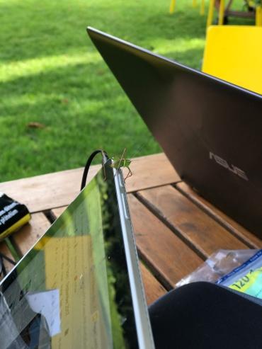 Cool little praying mantis that crawled atop our laptops