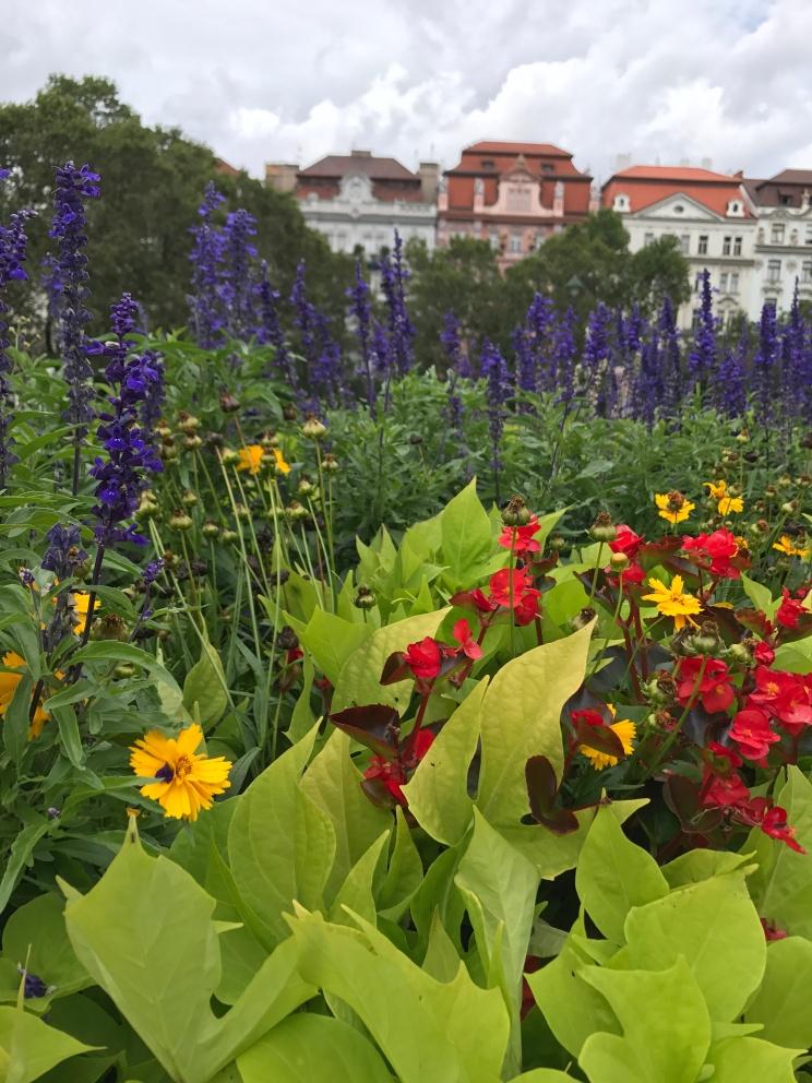 Flowers in Náměstí Míru / Peace Square