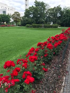 Flowers in Bezručovy sady park