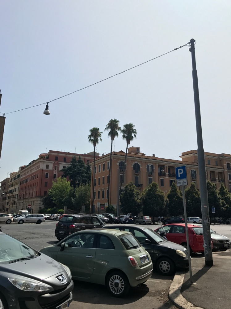 Street palm trees